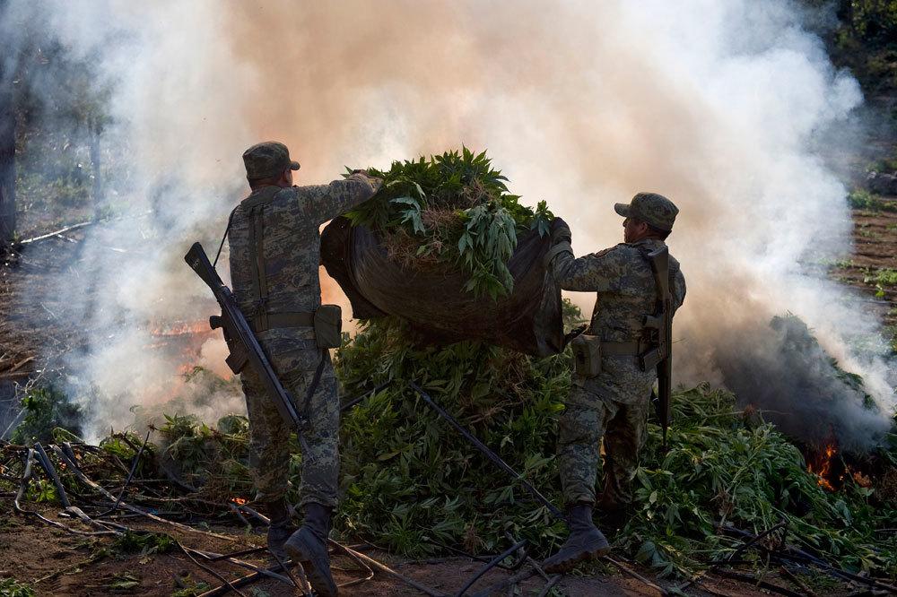 Soldati messicani bruciano piante di marijuana a Culiacán, il 30 gennaio 2012. - Alfredo Estrella, Afp
