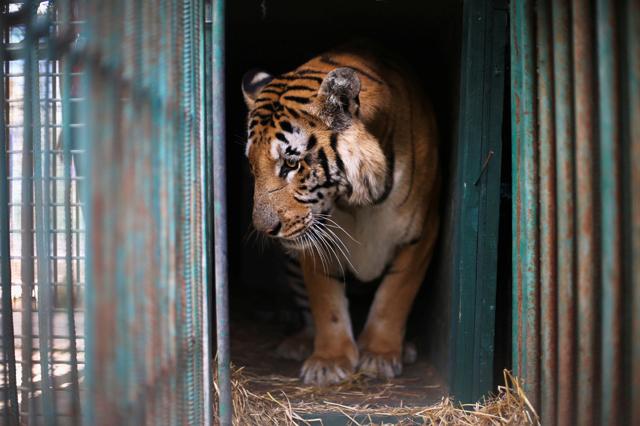 Lo zoo peggiore del mondo