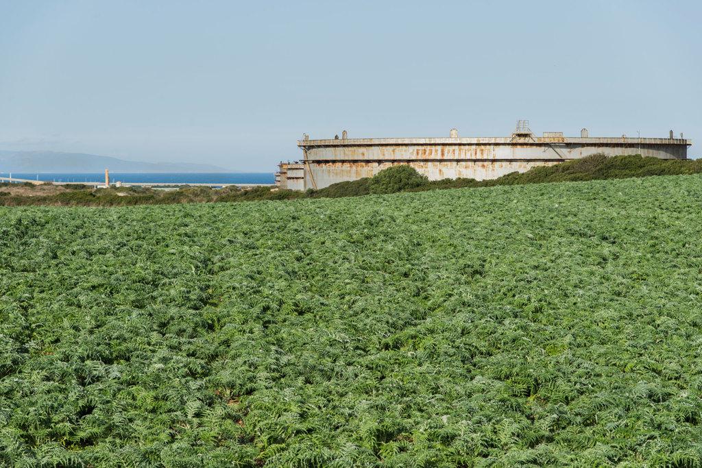 Un campo di cardi accanto al polo industriale di Porto Torres, il 16 novembre 2016. - Federica Mameli per Internazionale