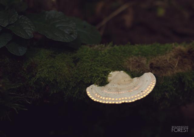 La foresta che si illumina di notte