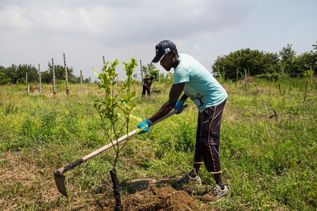 Mohamed lavora nei campi della Selva Lacandona, il 27 luglio 2016. - Luca Salvatore Pistone