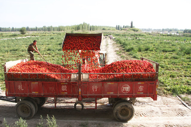 Regione dello Xinjiang, Cina, agosto 2015. - Xinhua/Eyevine/Contrasto