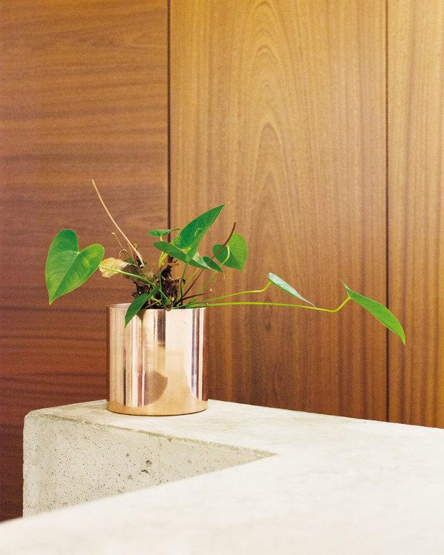 La vita segreta delle piante negli uffici