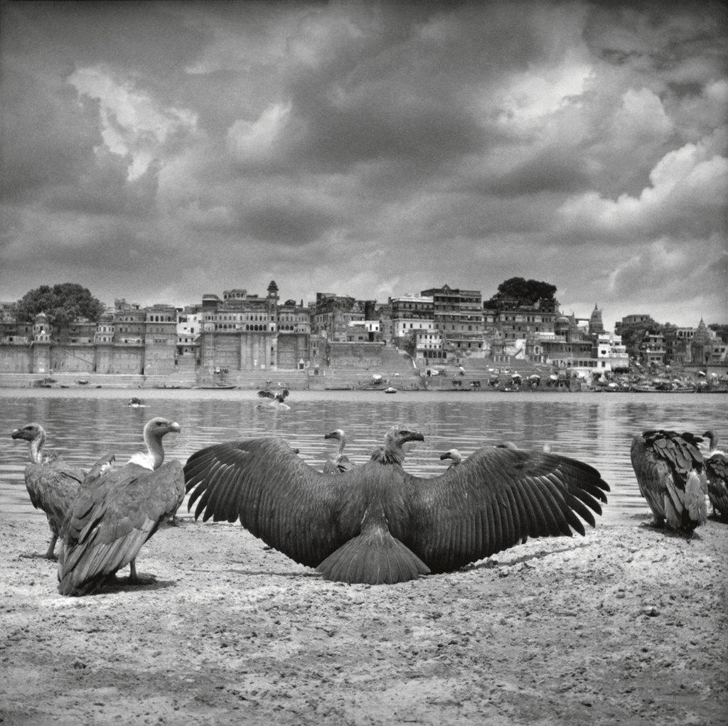 Salvate gli avvoltoi