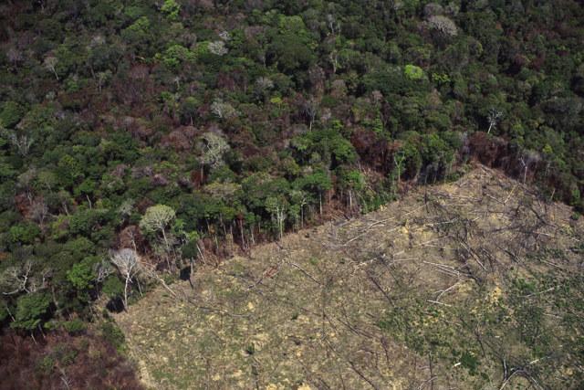 L'essere umano è il responsabile di epidemie e disastri ambientali