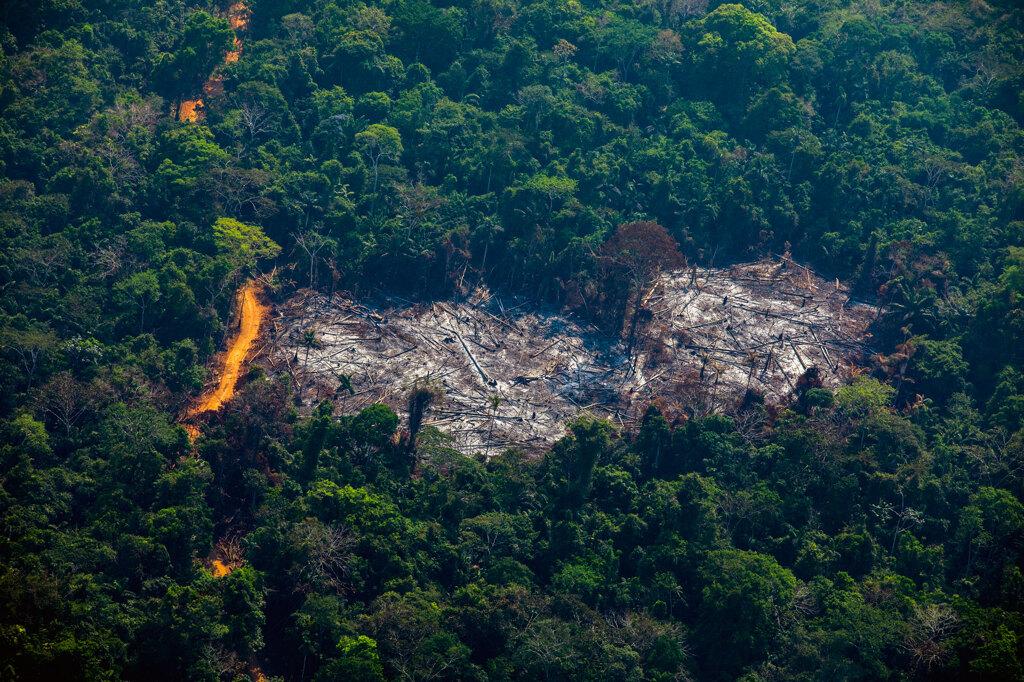 La deforestazione ad Altamira, nello stato del Pará, il 28 agosto 2019. - Joao Laet, Afp