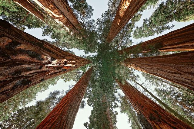 Le foreste stanno già cambiando