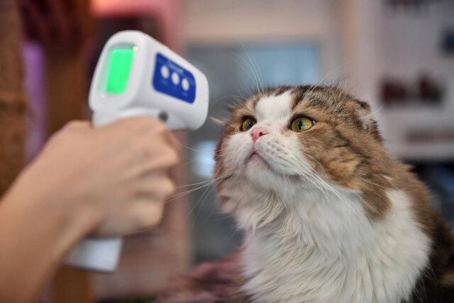 Qual è l'effetto dell'aumento dei casi estivi di covid-19 sui cani e i gatti?