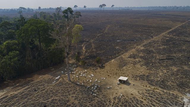 I danni all'ambiente provocano nuove malattie tra gli esseri umani